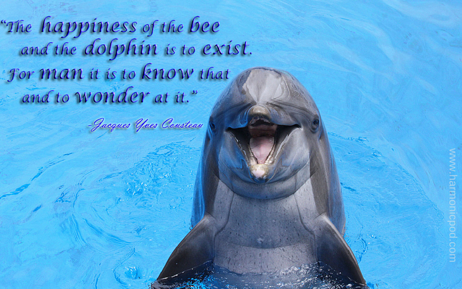 Cousteau dolphin bee happiness 10-14